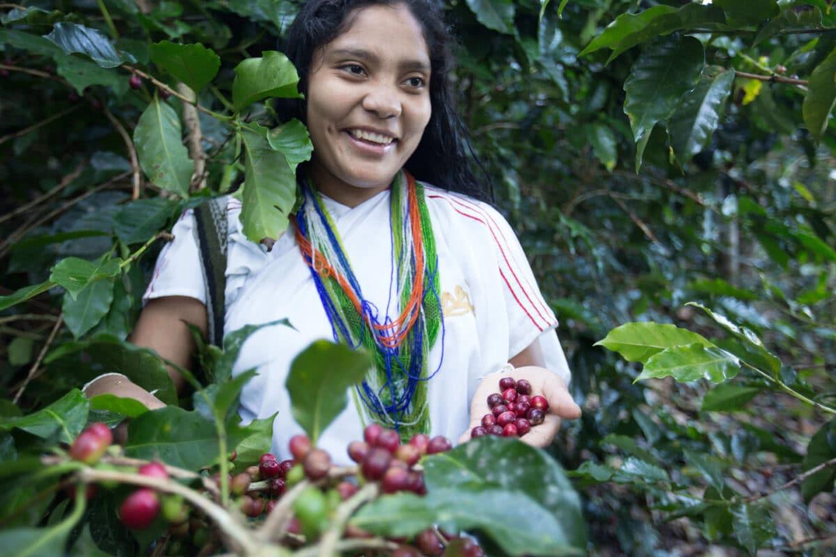 Seit 2014 verwendet Caffè Spettacolo Kaffee aus der Genossenschaft ANEI im Norden Kolumbiens.